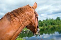 Paard in water Royalty-vrije Stock Fotografie