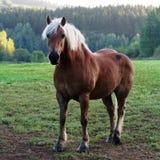 Paard in weide stock fotografie