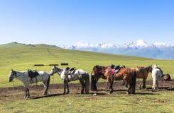 Paard in Weide van Xinjiang, China royalty-vrije stock afbeelding