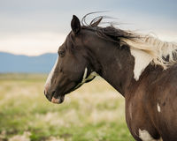 Paard in weiland Royalty-vrije Stock Fotografie