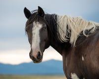 Paard in weiland Stock Fotografie