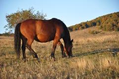 Paard in weiland Royalty-vrije Stock Foto