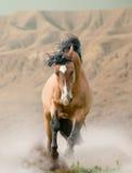 Paard in woestijn stock afbeelding