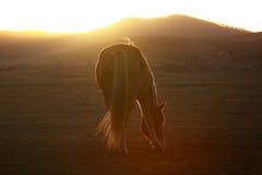 Paard in Wulanbutong-Weiden Stock Afbeeldingen