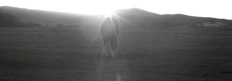 Paard in Wulanbutong-Weiden Royalty-vrije Stock Foto