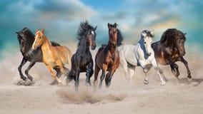 Paard zes in zandige woestijn in werking die wordt gesteld die stock afbeeldingen