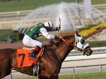 Paard zeven neemt het Lood Stock Foto