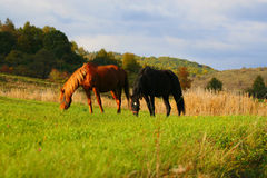 Paard in zonsondergang Royalty-vrije Stock Foto