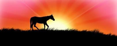 Paard in Zonsondergang Stock Foto