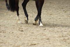 Paardbenen die tempo op zand met hoeven tonen stock fotografie