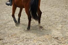 Paardbenen die tempo op zand met hoeven tonen stock afbeelding