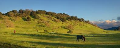 Paardboerderij dichtbij Stanford University Royalty-vrije Stock Afbeeldingen