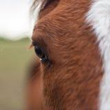 Paardclose-up Royalty-vrije Stock Afbeeldingen