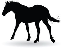 Paarddraf Royalty-vrije Stock Afbeeldingen