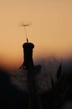 Paardebloem bij zonsondergang royalty-vrije stock foto's