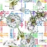 Paardebloem blowball met zaden Waterverf achtergrondillustratiereeks Naadloos patroon als achtergrond stock illustratie