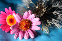Paardebloem en bloemen Stock Afbeelding