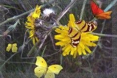 Paardebloem en vlinders Royalty-vrije Stock Foto's