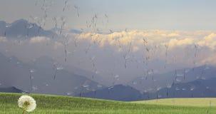 Paardebloem met zaden die in de wind over een duidelijke hemel wegblazen Royalty-vrije Stock Fotografie