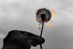 Paardebloem op brand, zwart-witte foto royalty-vrije stock afbeelding