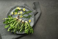Paardebloembladeren voor salade royalty-vrije stock foto's