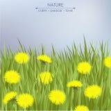 Paardebloemen en groen gras Stock Afbeelding
