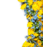 Paardebloemen en me -me-nots op witte achtergrond royalty-vrije stock fotografie