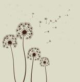 Paardebloemen. Vector Stock Afbeeldingen