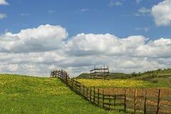 Paardebloemlandschap stock fotografie