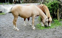 Paarden 1 royalty-vrije stock foto