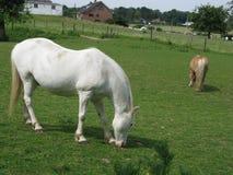Paarden Stock Foto's