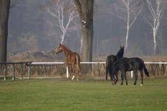 Paarden royalty-vrije stock afbeelding