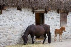 Paarden. Royalty-vrije Stock Foto