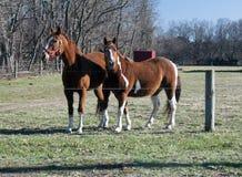 Paarden 1324 Royalty-vrije Stock Fotografie