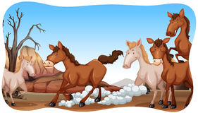 Paarden stock illustratie