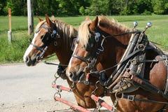 Paarden Royalty-vrije Stock Foto