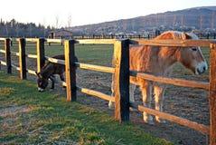Paarden achter een omheining bij zonsondergang Royalty-vrije Stock Afbeeldingen