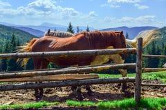 Paarden achter een omheining tegen een achtergrond van bergen met naaldbossen worden behandeld dat stock foto's