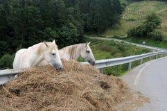 Paarden. Asturias Royalty-vrije Stock Afbeeldingen