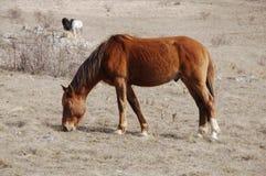 Paarden in bergen Stock Fotografie