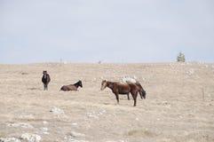 Paarden in bergen Stock Foto's