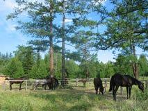 Paarden bij de hitching post Royalty-vrije Stock Afbeeldingen