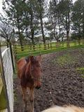 Paarden bij de Ierse nagel royalty-vrije stock afbeeldingen