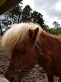 Paarden bij de Ierse nagel stock foto