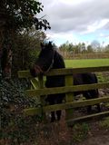 Paarden bij de Ierse nagel royalty-vrije stock foto