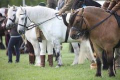 Paarden bij de renbaan Royalty-vrije Stock Fotografie