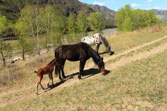 Paarden bij de weg Stock Afbeeldingen