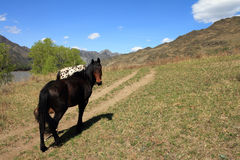 Paarden bij de weg Stock Foto's