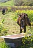 Paarden bij groene gebieden Stock Afbeelding