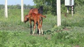 Paarden bij het landbouwbedrijf stock videobeelden